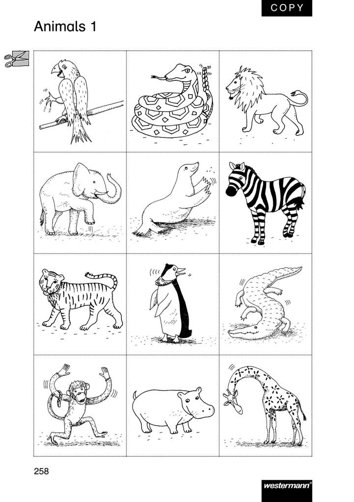 Animals Zoo Animals - Wort- und Bildkarten: Verlage der Westermann ...