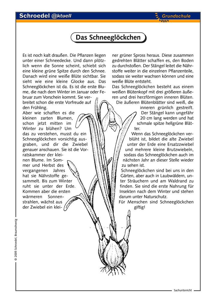 Ungewöhnlich Pflanzenteile Arbeitsblatt Zeitgenössisch ...