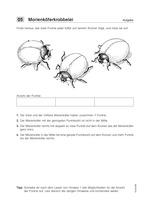 Logicals 1 Probeseite mit Lösung - Marienkäfer