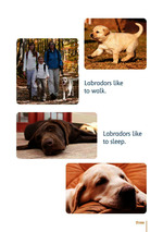 Labradors are lovely_Probeseite 1