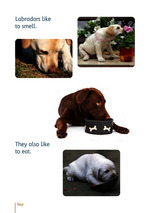 Labradors are lovely_Probeseite 2