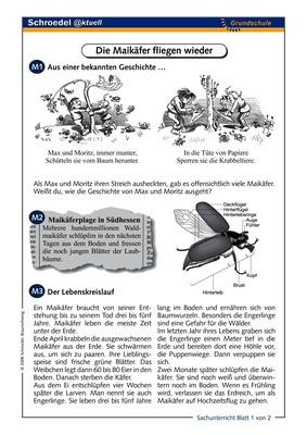 Die Maikäfer fliegen wieder - - ein Arbeitsblatt über den Maikäfer ...