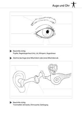 Unsere Sinne Auge Und Ohr Verlage Der Westermann Gruppe