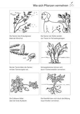 verbreitung von pflanzensamen wie sich pflanzen vermehren schroedel verlag. Black Bedroom Furniture Sets. Home Design Ideas