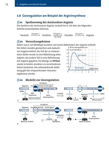 Atemberaubend Genetik Rasse Arbeitsblatt Antworten Fotos ...