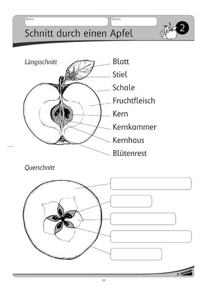 Der Apfel Werkstatt 1 2 Schuljahr Werkstatt Zu Anton Auch