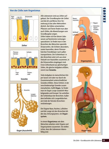 Biologie heute aktuell - Allgemeine Ausgabe 2003 für die Realschule ...