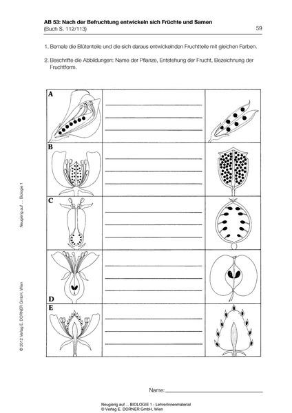 neugierig auf biologie 1 lehrer innenmaterial westermann gruppe in sterreich. Black Bedroom Furniture Sets. Home Design Ideas