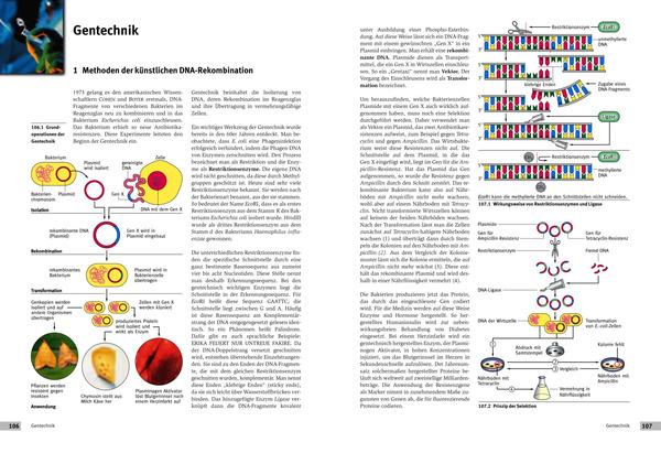 Fein Genetik Ist Die Wissenschaft Der Vererbung Arbeitsblatt ...