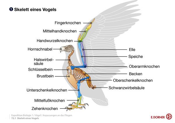 Vogelskelett Beschriftet