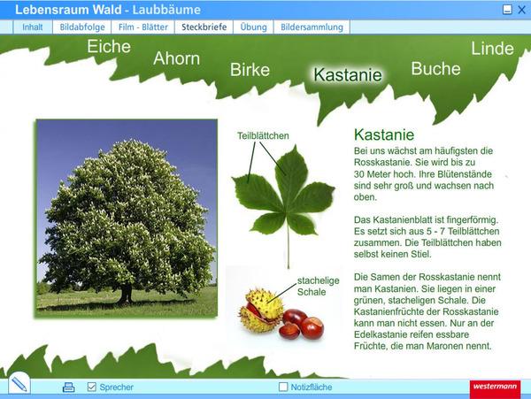 Lebensraum Wald - Einzelplatzlizenz: Das ...