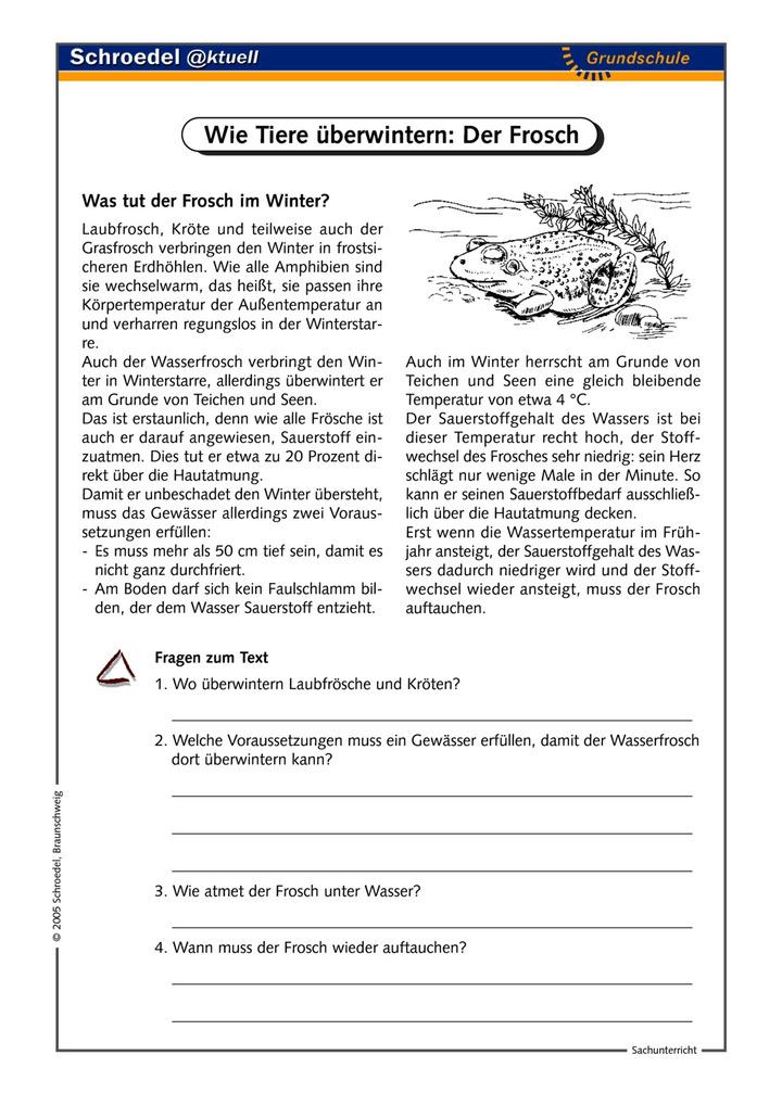 Wie Tiere überwintern: Der Frosch - - ein Arbeitsblatt zu Tieren im ...