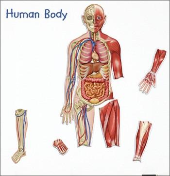 Der menschliche Körper - SCHUBI
